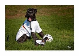 BIG DOG Hundetrikot Deutschland WM  *AUSVERKAUFT* - Bild vergrößern