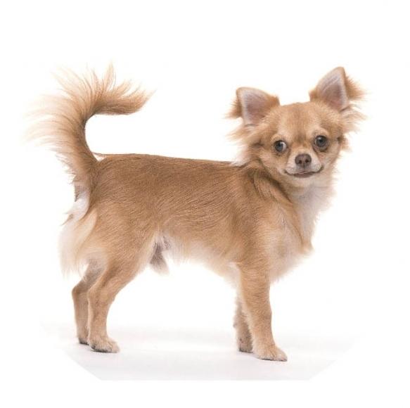 hunde motiv leinen hunderassen leinen automatik rollleinen f r hunde laufleine f r hunde. Black Bedroom Furniture Sets. Home Design Ideas